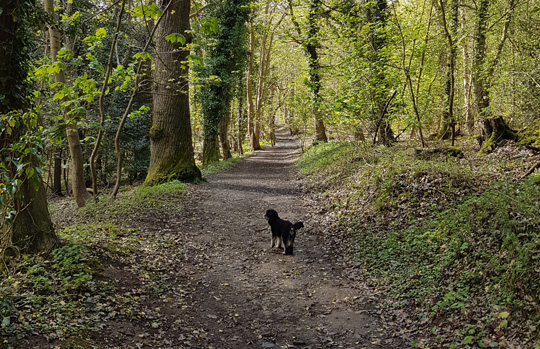 sheringham-wood-dog-2